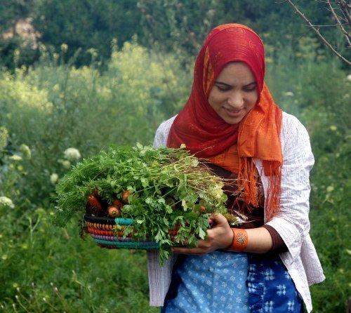 Récolte des paniers bio à la ferme